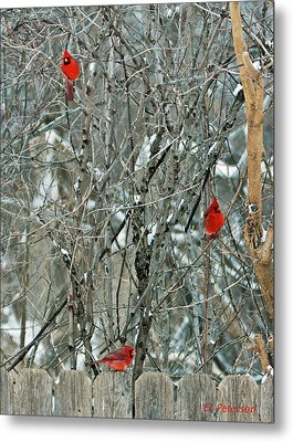 Winter Cardinals Metal Print by Edward Peterson