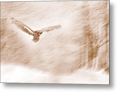 Winter Feathers Metal Print