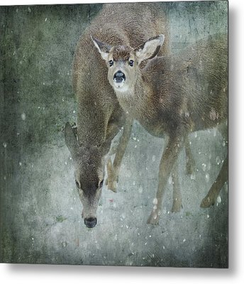 Metal Print featuring the photograph Winter Foraging by Sally Banfill
