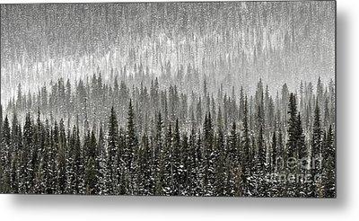Winter Forest Metal Print by Brad Allen Fine Art