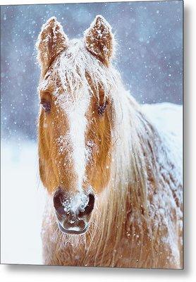 Winter Horse Portrait Metal Print