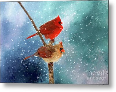 Metal Print featuring the photograph Winter Love by Darren Fisher