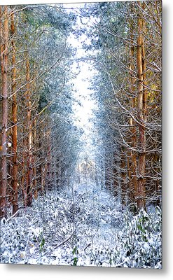 Winter Path Metal Print by Svetlana Sewell