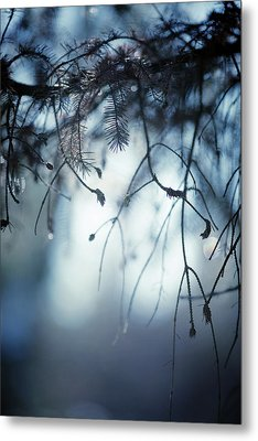 Metal Print featuring the photograph Winter by Rebecca Cozart