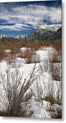 Winter Spice Metal Print by Royce Howland