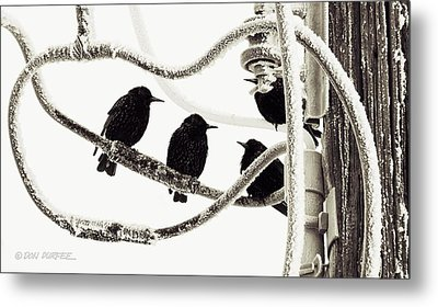 Metal Print featuring the photograph Winter Starlings by Don Durfee