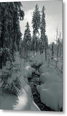 winter sun in Upper Harz - monochrome version Metal Print