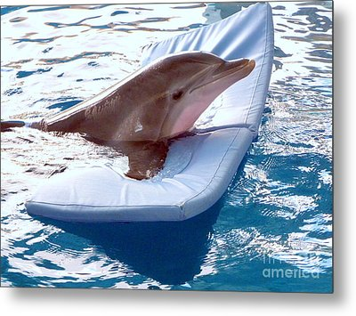 Metal Print featuring the photograph Winter The Dolphin by Terri Mills