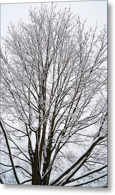 Winter Tree    Poster Metal Print