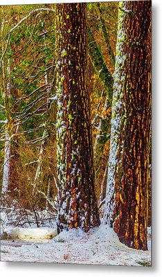 Winter Trees 2 Metal Print by Garry Gay