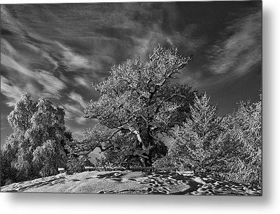 Winter Trees Metal Print by Mark Denham