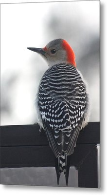 Metal Print featuring the photograph Winter Woodpecker by Diane Merkle