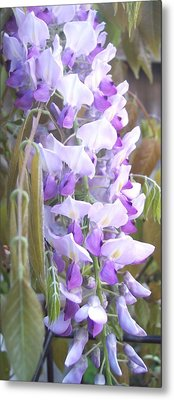 Wisteria Metal Print by Jean Booth