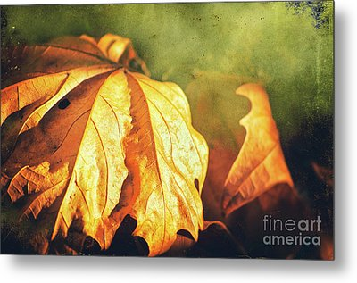 Metal Print featuring the photograph Withered Leaves by Silvia Ganora