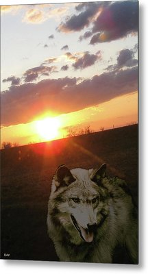 Wolf Sunset Metal Print by Debra     Vatalaro
