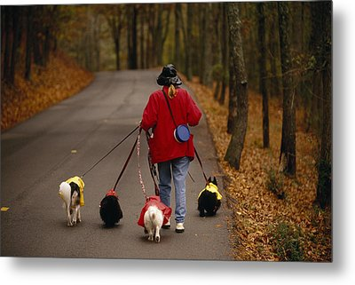 Woman Walks Her Army Of Dogs Dressed Metal Print by Raymond Gehman