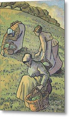 Women Gathering Mushrooms Metal Print