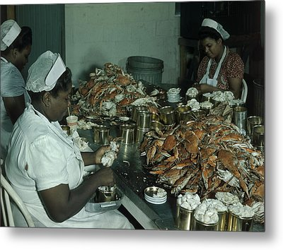 Women Pick And Pack Crab Meat Into Cans Metal Print by Robert Sisson