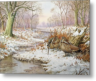 Woodcock Metal Print by Carl Donner