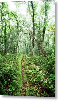 Metal Print featuring the photograph Wooded Trail by Alan Raasch