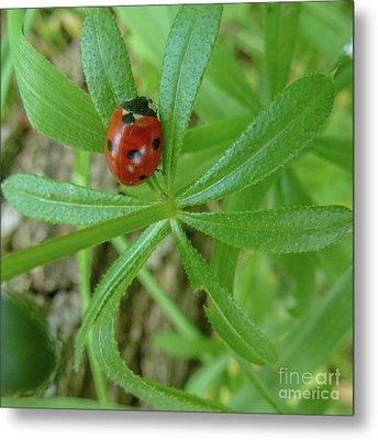 World Of Ladybug 3 Metal Print by Jean Bernard Roussilhe