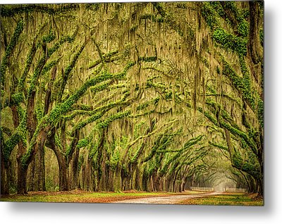 Wormsloe Drive Metal Print by Phyllis Peterson