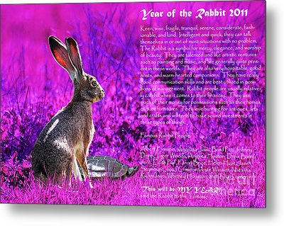 Year Of The Rabbit 2011 . Magenta Metal Print by Wingsdomain Art and Photography