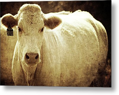 Metal Print featuring the photograph Yeg 3110 by Trish Mistric
