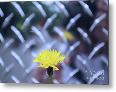 Yellow And Silver Metal Print