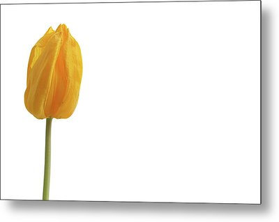 Metal Print featuring the photograph Yellow And Tulip by Marie Leslie