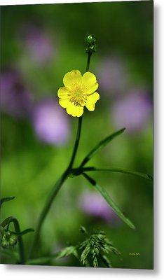 Yellow Buttercup Metal Print by Christina Rollo