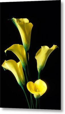 Yellow Calla Lilies  Metal Print by Garry Gay