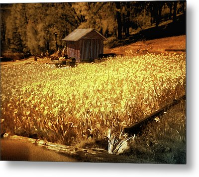 Metal Print featuring the digital art Yellow Daffodil Field by Michael Cleere