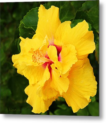 Yellow Double Hibiscus Metal Print by Kerri Ligatich