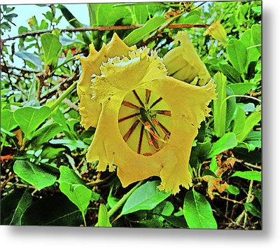 Yellow Flower. Metal Print by Andy Za