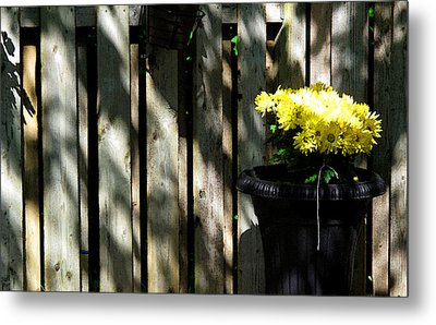 Yellow Flowers In A Black Flower Pot 2wc2 Metal Print