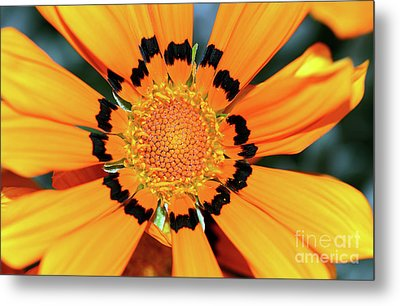 Metal Print featuring the photograph Yellow Gazania By Kaye Menner by Kaye Menner
