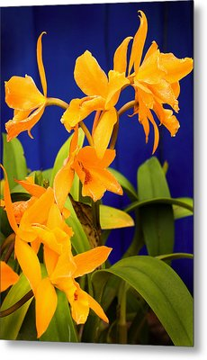 yellow Orange Orchids Metal Print