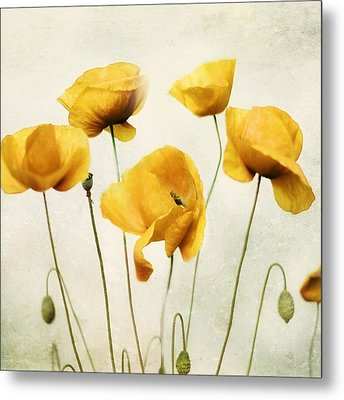 Yellow Poppies - Square Version Metal Print by Amy Tyler