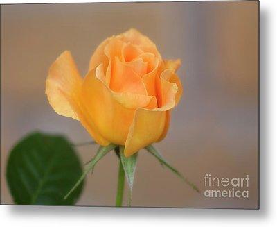 Yellow Rose Of Texas Metal Print