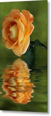 Yellow Rose Metal Print by Rick Friedle