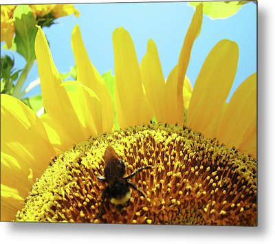 Yellow Sunflower Art Prints Bumble Bee Baslee Troutman Metal Print by Baslee Troutman