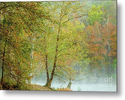 Metal Print featuring the photograph Yellow Trees by Iris Greenwell