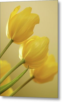 Yellow Tulip Trio Metal Print by Bonnie Bruno