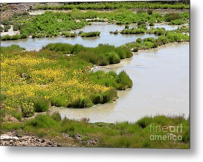 Yellow Wildflowers At Mud Volcano Area In Yellowstone National Park Metal Print by Louise Heusinkveld