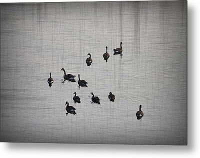 You Better Get Your Ducks In A Row Metal Print by Bill Cannon
