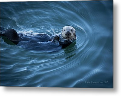 Metal Print featuring the photograph You Otter Take My Picture, Lady by Lora Lee Chapman