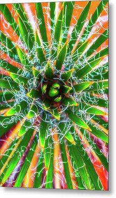 Metal Print featuring the photograph Yucca Sunrise by Darren White