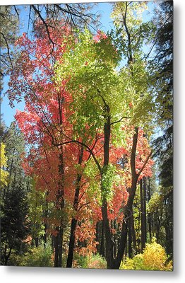 Yummy Fall Colors Metal Print by Sandy Tracey