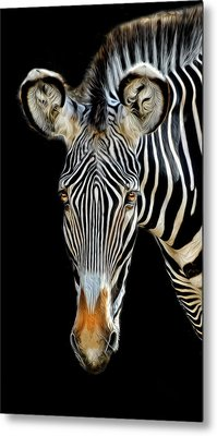 Metal Print featuring the photograph Zebra by Dave Mills